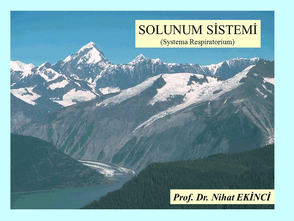 SOLUNUM SİSTEMİ (Systema Respiratorium) Prof. Dr. Nihat EKİNCİ