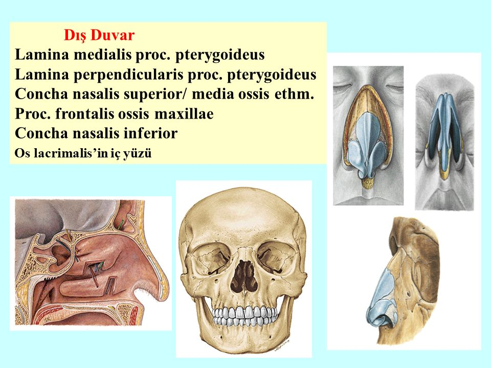 Lamina medialis proc. pterygoideus