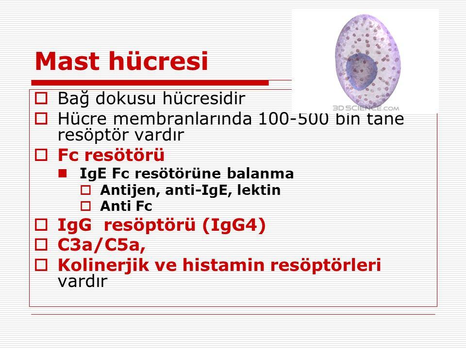 Mast hücresi Bağ dokusu hücresidir
