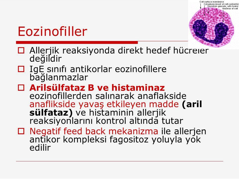 Eozinofiller Allerjik reaksiyonda direkt hedef hücreler değildir