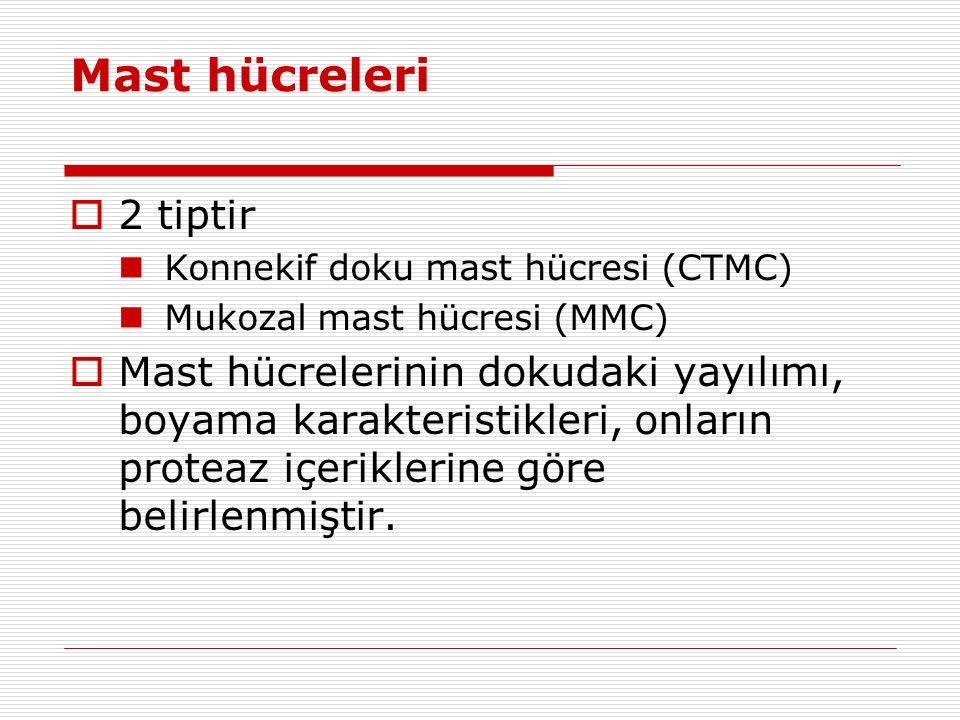 Mast hücreleri 2 tiptir. Konnekif doku mast hücresi (CTMC) Mukozal mast hücresi (MMC)