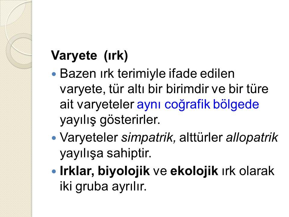 Varyete (ırk)