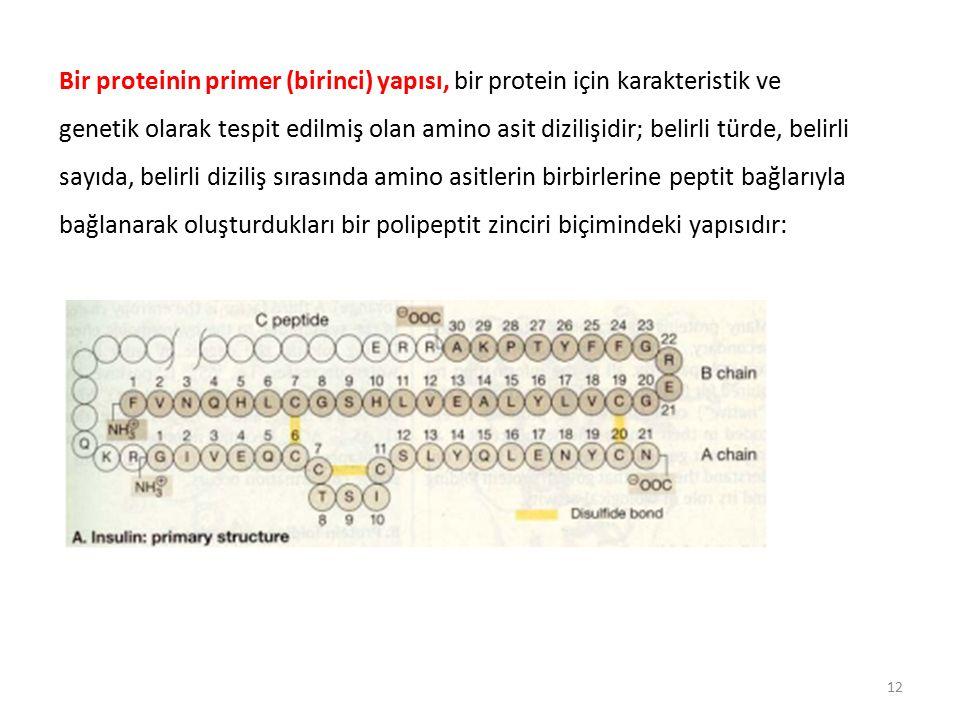 Bir proteinin primer (birinci) yapısı, bir protein için karakteristik ve genetik olarak tespit edilmiş olan amino asit dizilişidir; belirli türde, belirli sayıda, belirli diziliş sırasında amino asitlerin birbirlerine peptit bağlarıyla bağlanarak oluşturdukları bir polipeptit zinciri biçimindeki yapısıdır: