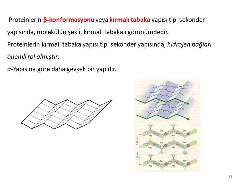 Proteinlerin β-konformasyonu veya kırmalı tabaka yapısı tipi sekonder yapısında, molekülün şekli, kırmalı tabakalı görünümdedir.