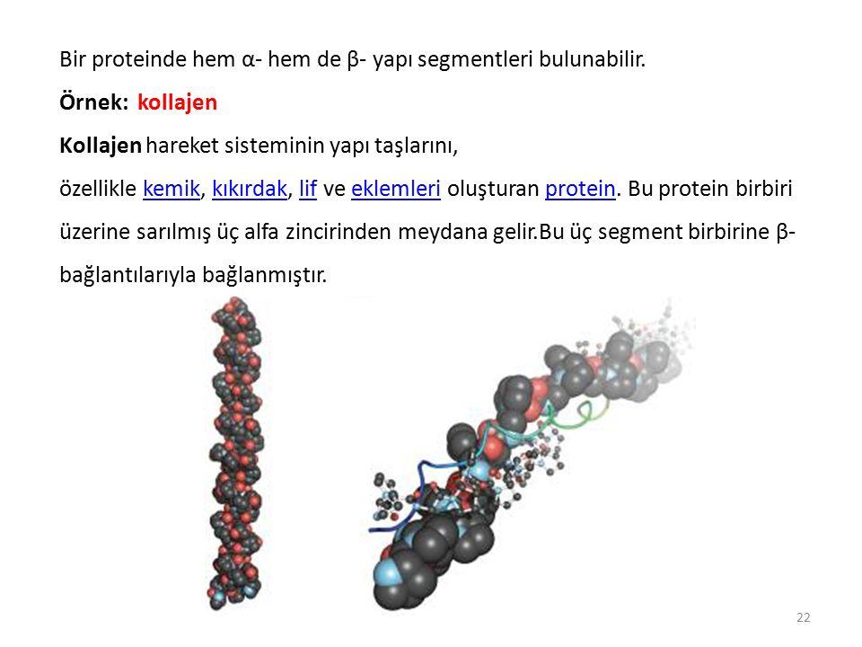 Bir proteinde hem α- hem de β- yapı segmentleri bulunabilir.