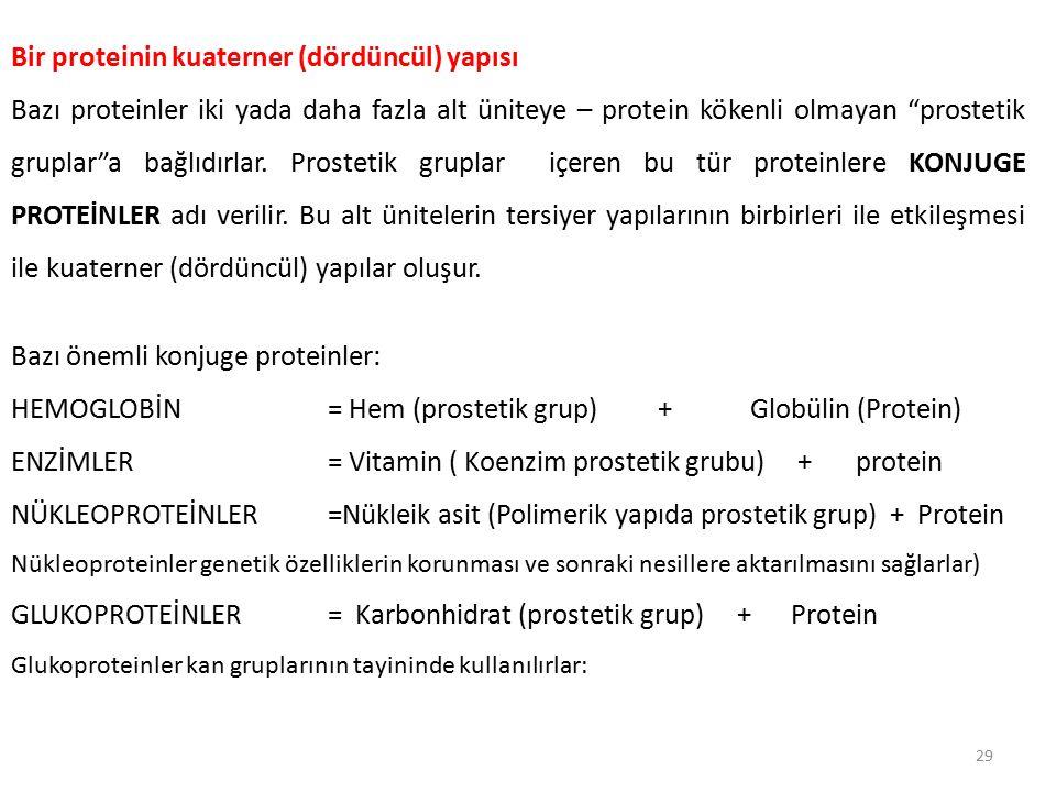 Bir proteinin kuaterner (dördüncül) yapısı