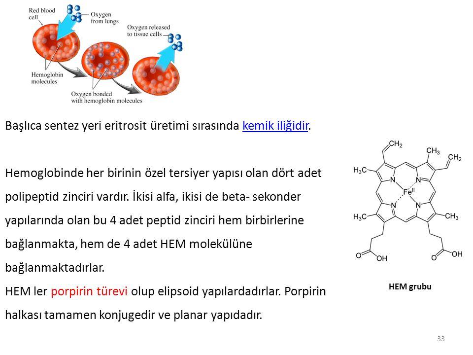 Başlıca sentez yeri eritrosit üretimi sırasında kemik iliğidir.