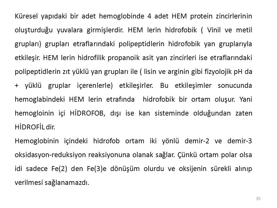 Küresel yapıdaki bir adet hemoglobinde 4 adet HEM protein zincirlerinin oluşturduğu yuvalara girmişlerdir. HEM lerin hidrofobik ( Vinil ve metil grupları) grupları etraflarındaki polipeptidlerin hidrofobik yan gruplarıyla etkileşir. HEM lerin hidrofilik propanoik asit yan zincirleri ise etraflarındaki polipeptidlerin zıt yüklü yan grupları ile ( lisin ve arginin gibi fizyolojik pH da + yüklü gruplar içerenlerle) etkileşirler. Bu etkileşimler sonucunda hemoglabindeki HEM lerin etrafında hidrofobik bir ortam oluşur. Yani hemogloinin içi HİDROFOB, dışı ise kan sisteminde olduğundan zaten HİDROFİL dir.