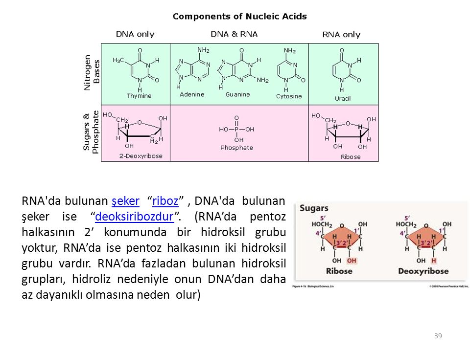 RNA da bulunan şeker riboz , DNA da bulunan şeker ise deoksiribozdur .