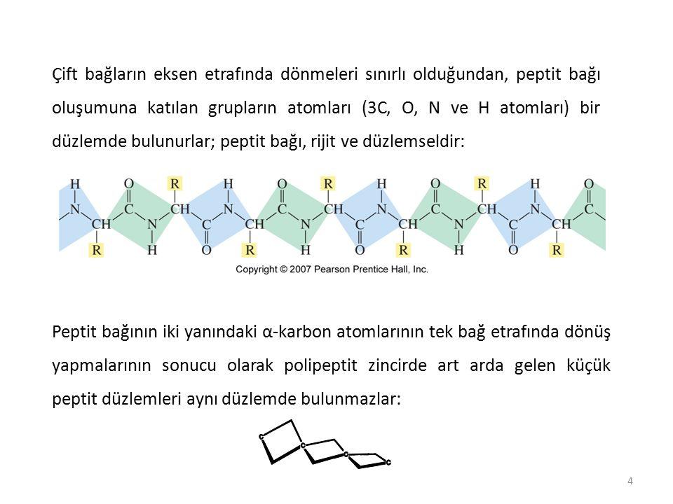 Çift bağların eksen etrafında dönmeleri sınırlı olduğundan, peptit bağı oluşumuna katılan grupların atomları (3C, O, N ve H atomları) bir düzlemde bulunurlar; peptit bağı, rijit ve düzlemseldir: