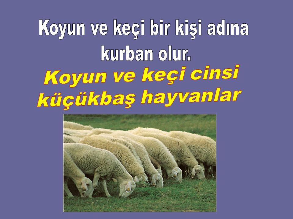 Koyun ve keçi bir kişi adına