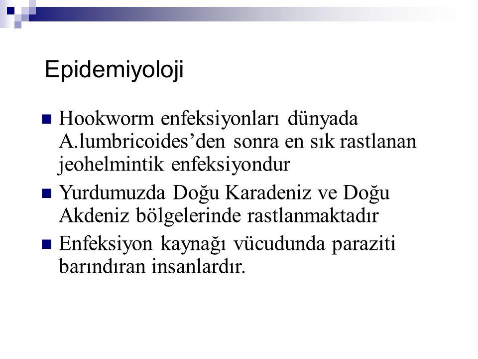 Epidemiyoloji Hookworm enfeksiyonları dünyada A.lumbricoides'den sonra en sık rastlanan jeohelmintik enfeksiyondur.