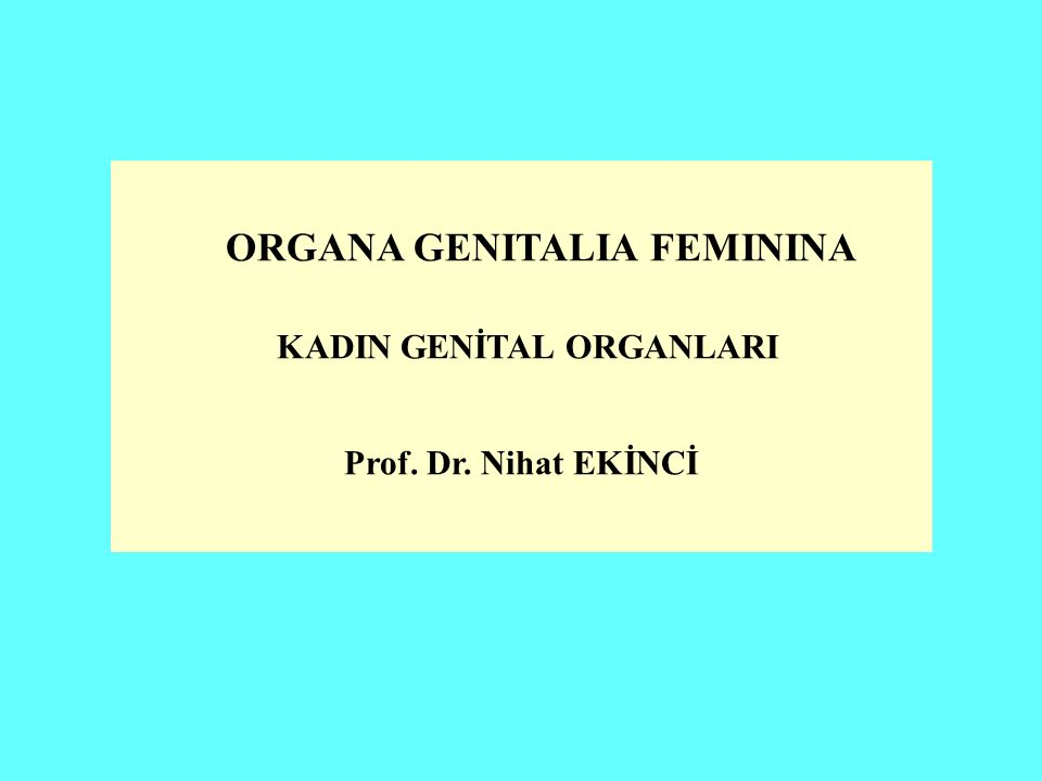 ORGANA GENITALIA FEMININA KADIN GENİTAL ORGANLARI