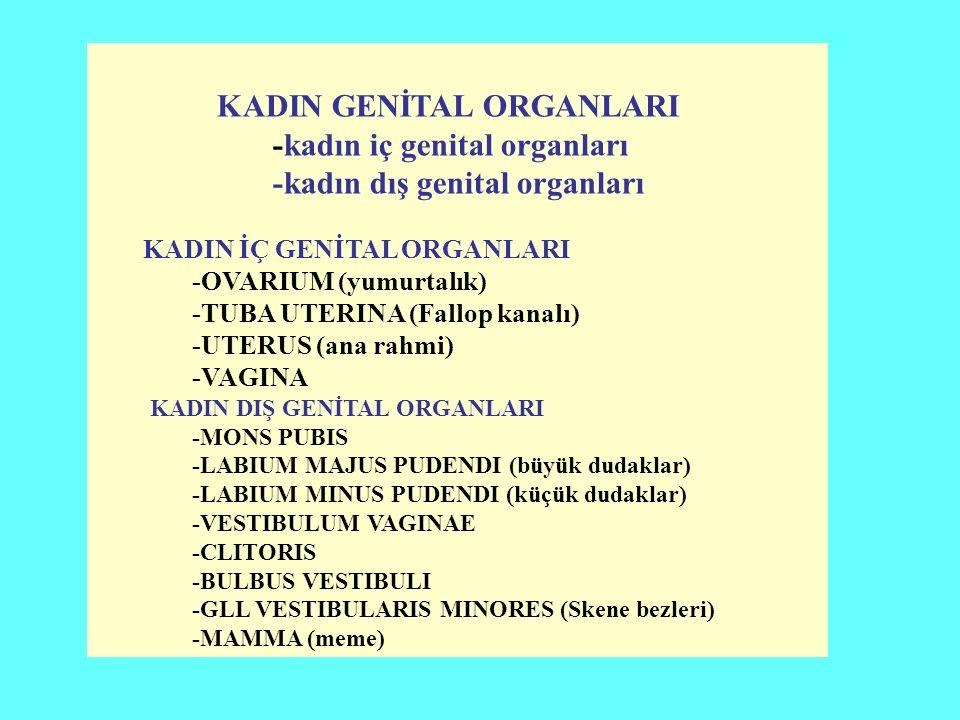 KADIN GENİTAL ORGANLARI -kadın iç genital organları