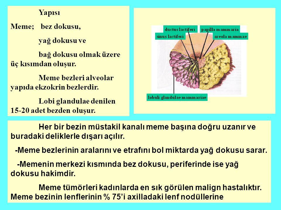 Yapısı Meme; bez dokusu, yağ dokusu ve. bağ dokusu olmak üzere üç kısımdan oluşur. Meme bezleri alveolar yapıda ekzokrin bezlerdir.