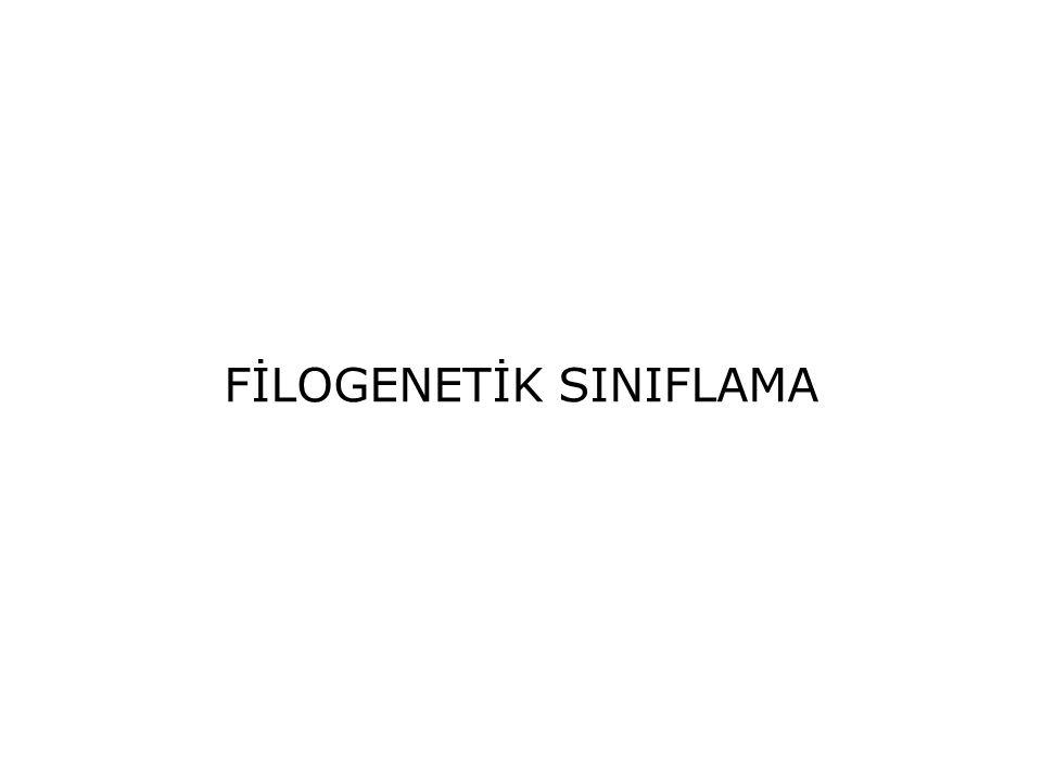 FİLOGENETİK SINIFLAMA