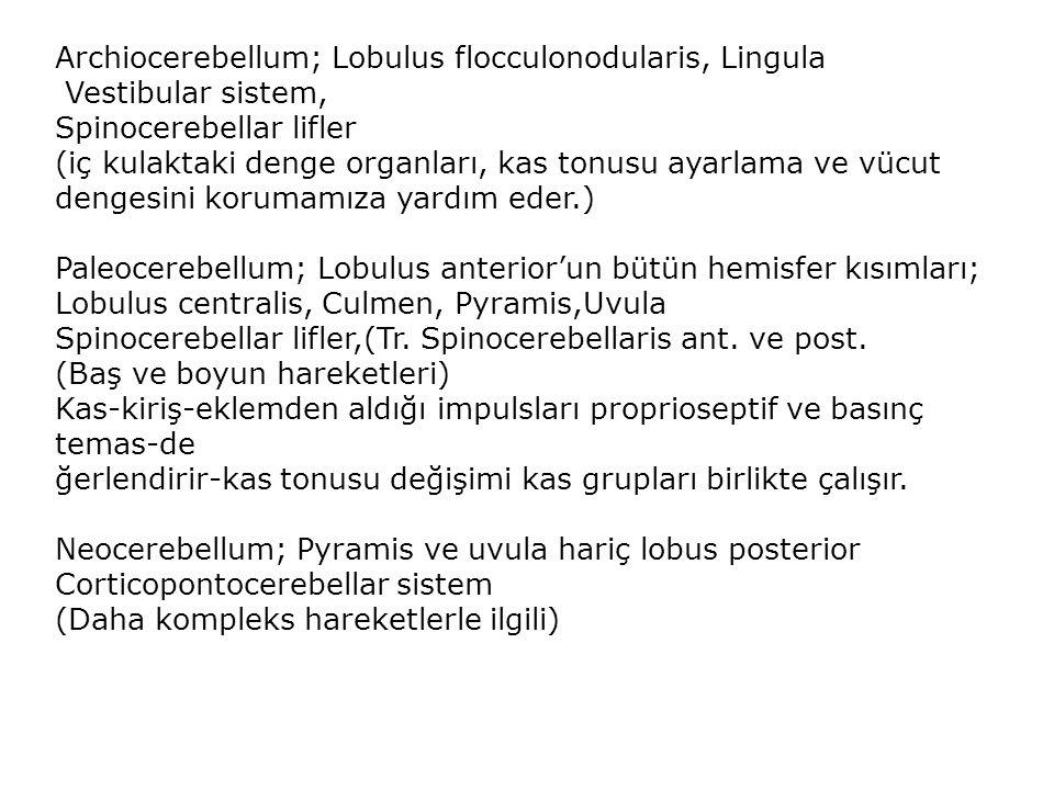 Archiocerebellum; Lobulus flocculonodularis, Lingula