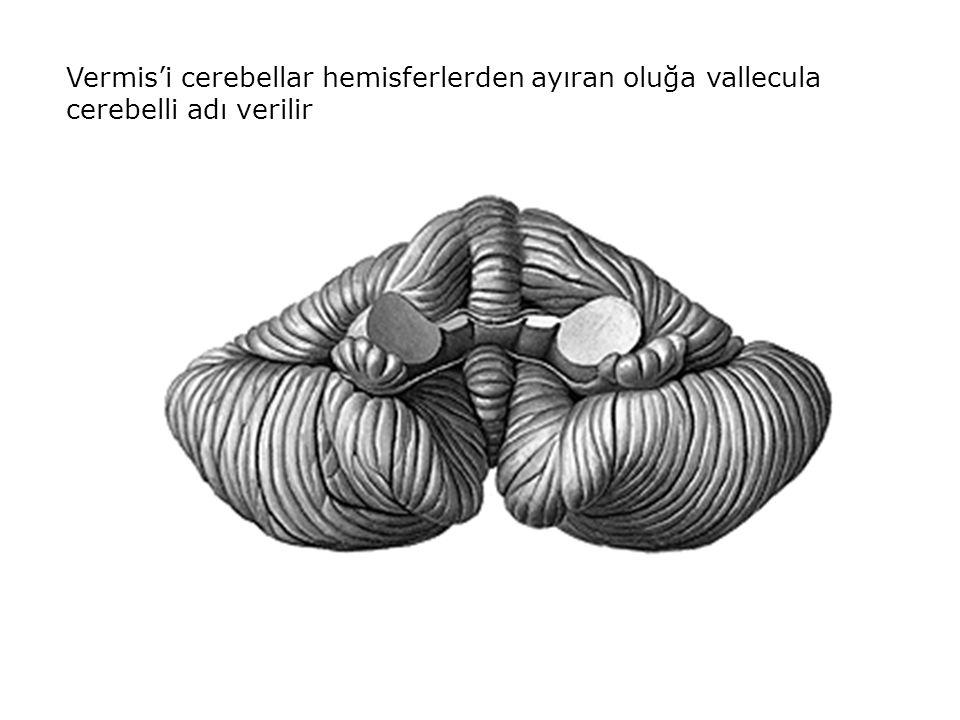 Vermis'i cerebellar hemisferlerden ayıran oluğa vallecula cerebelli adı verilir