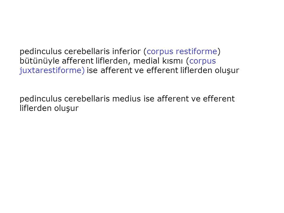 pedinculus cerebellaris inferior (corpus restiforme) bütünüyle afferent liflerden, medial kısmı (corpus juxtarestiforme) ise afferent ve efferent liflerden oluşur