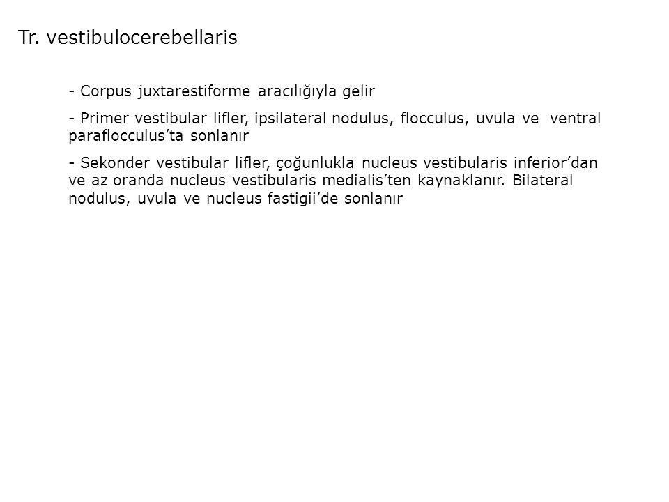 Tr. vestibulocerebellaris