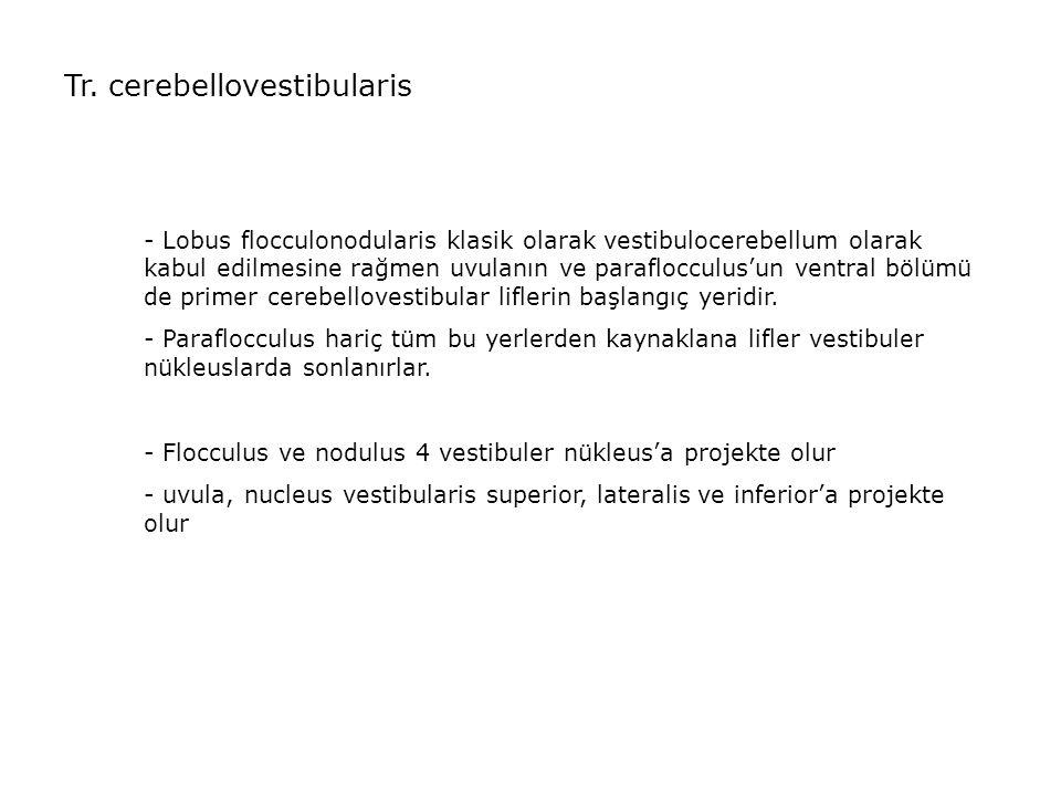 Tr. cerebellovestibularis