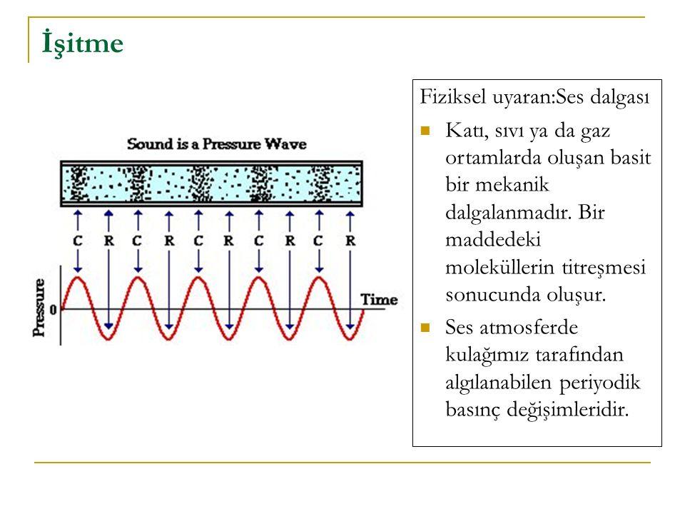 İşitme Fiziksel uyaran:Ses dalgası
