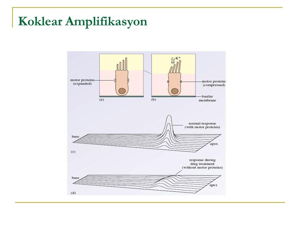 Koklear Amplifikasyon