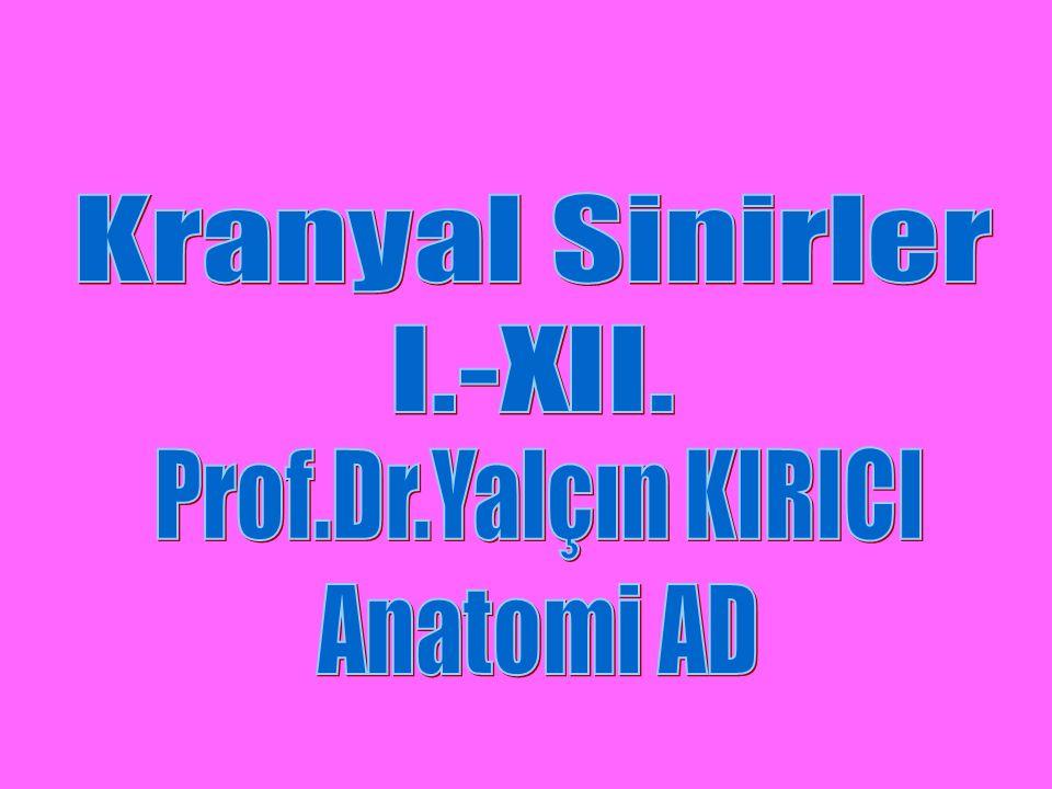 Kranyal Sinirler I.-XII. Prof.Dr.Yalçın KIRICI Anatomi AD