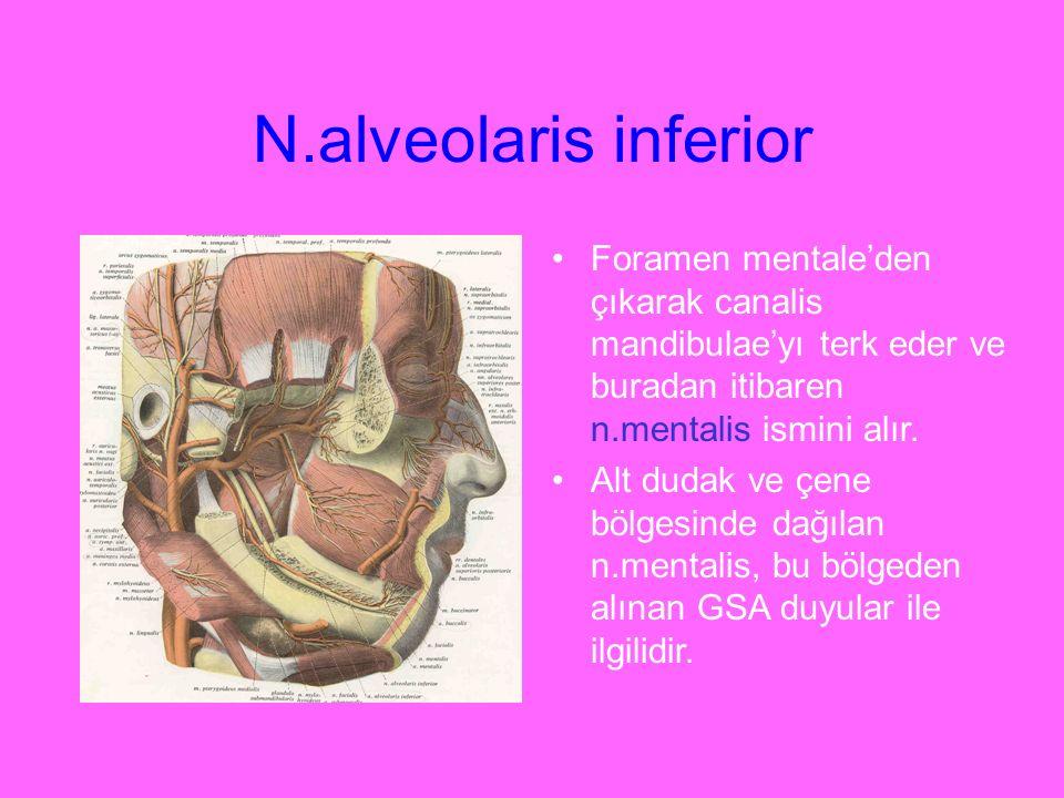N.alveolaris inferior Foramen mentale'den çıkarak canalis mandibulae'yı terk eder ve buradan itibaren n.mentalis ismini alır.