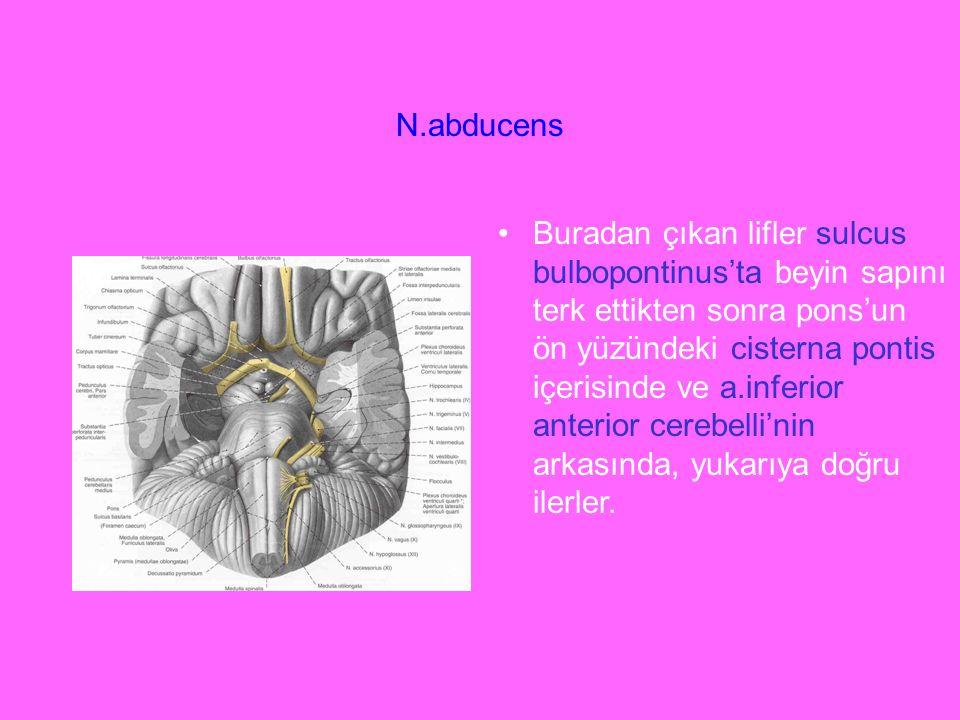 N.abducens