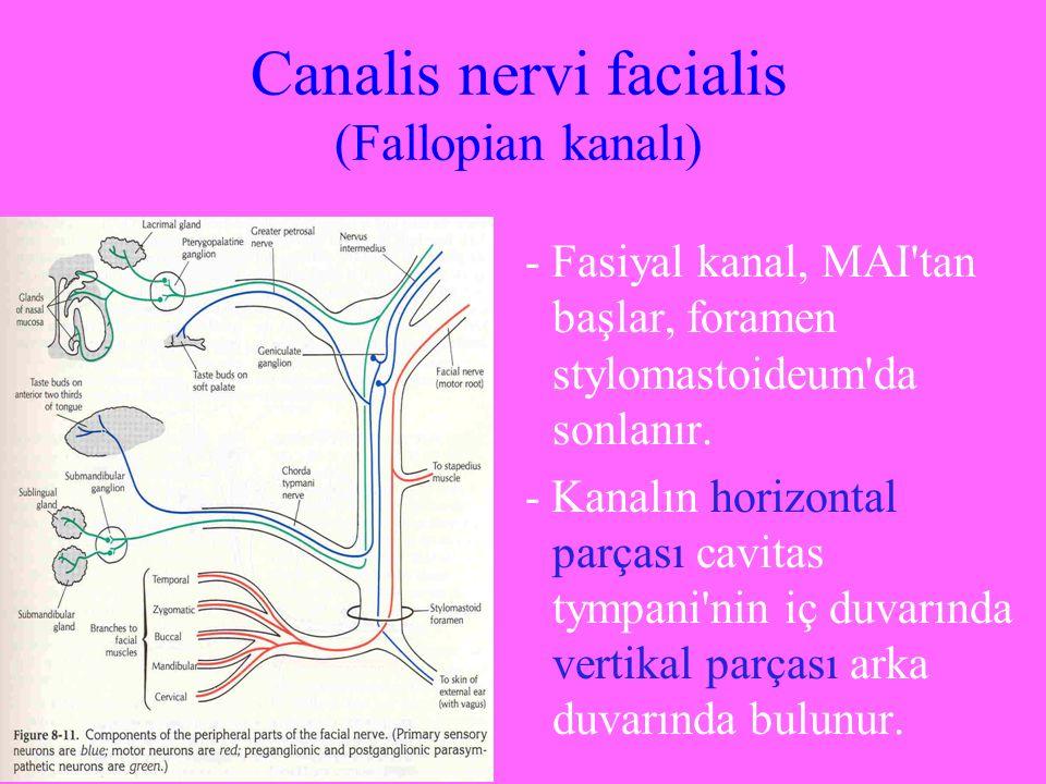 Canalis nervi facialis (Fallopian kanalı)