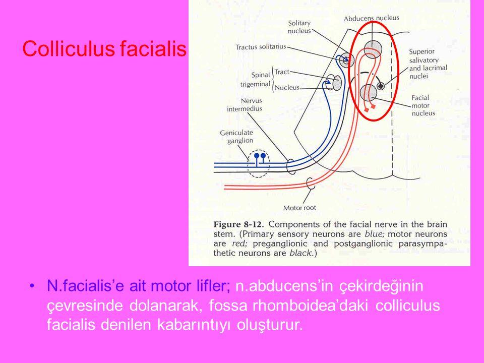 Colliculus facialis a.