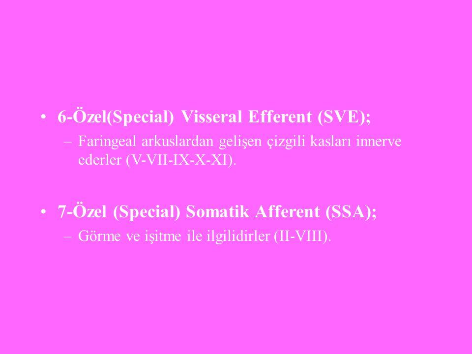 6-Özel(Special) Visseral Efferent (SVE);