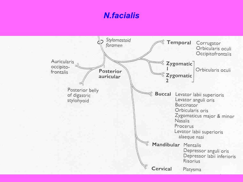 N.facialis