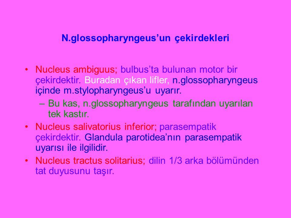 N.glossopharyngeus'un çekirdekleri