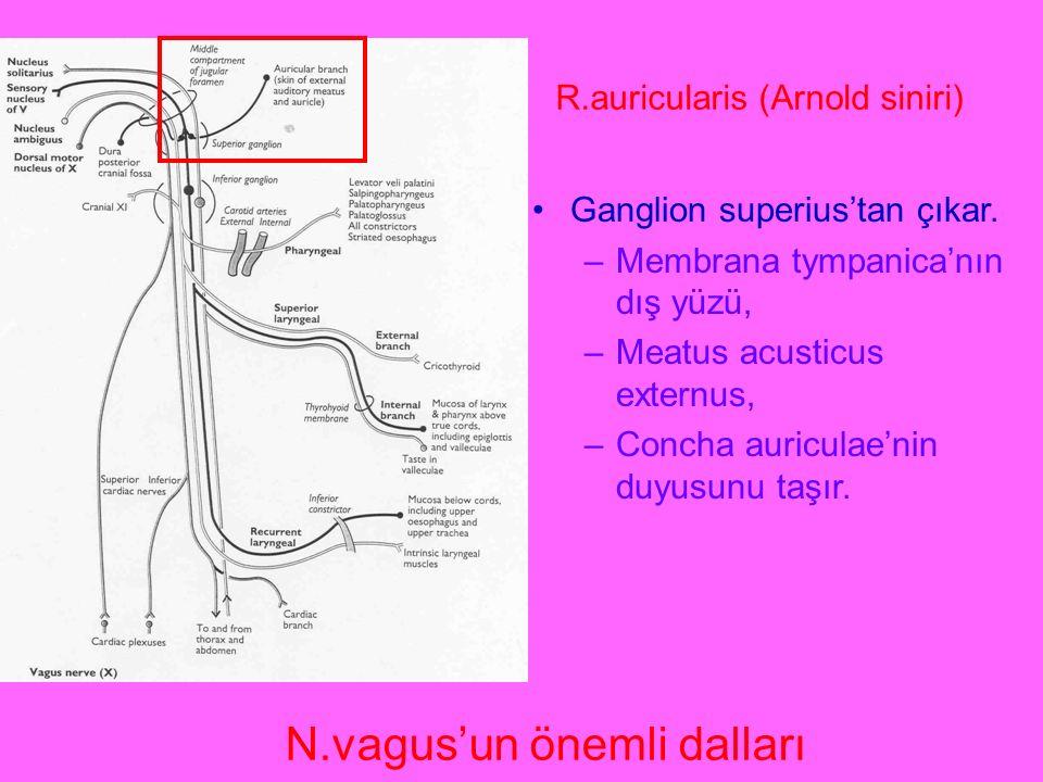 N.vagus'un önemli dalları