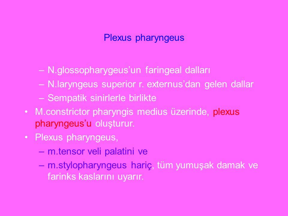 Plexus pharyngeus N.glossopharygeus'un faringeal dalları. N.laryngeus superior r. externus'dan gelen dallar.