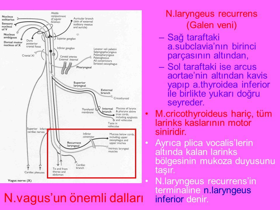 N.laryngeus recurrens (Galen veni)