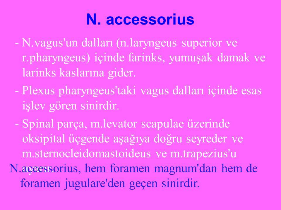 N. accessorius - N.vagus un dalları (n.laryngeus superior ve r.pharyngeus) içinde farinks, yumuşak damak ve larinks kaslarına gider.