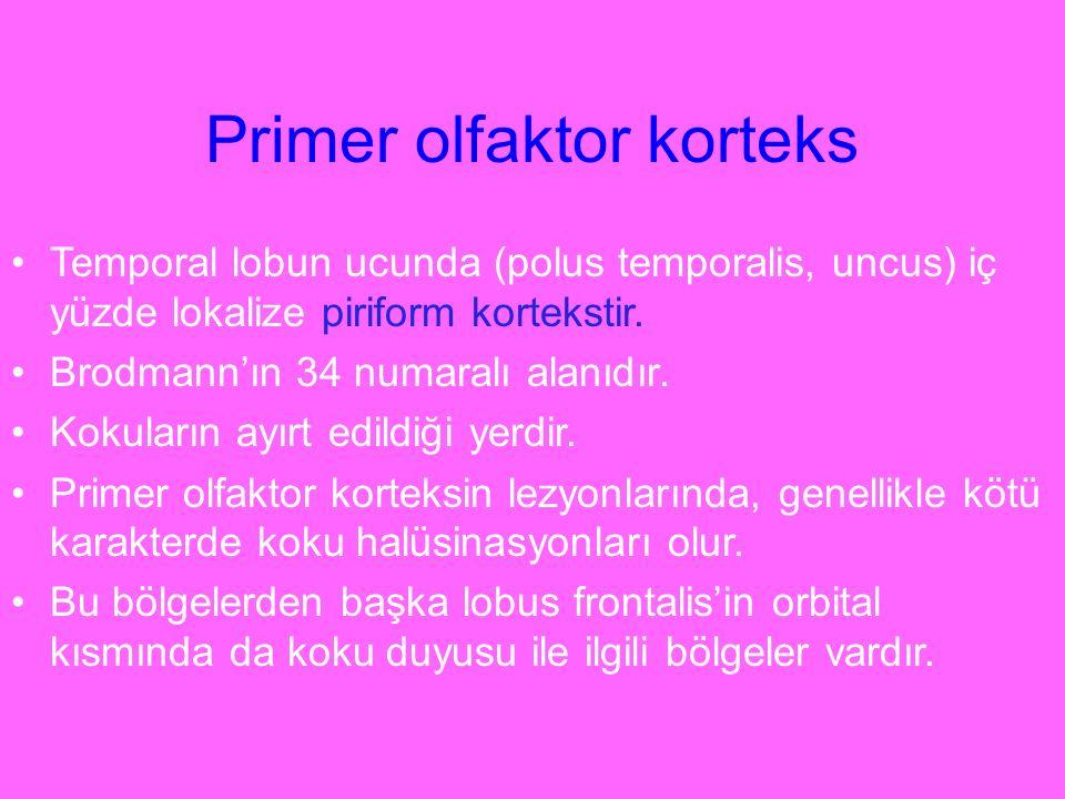 Primer olfaktor korteks