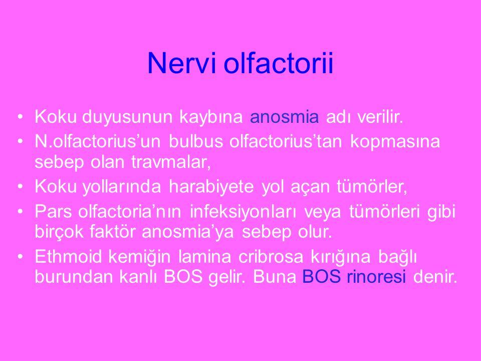 Nervi olfactorii Koku duyusunun kaybına anosmia adı verilir.