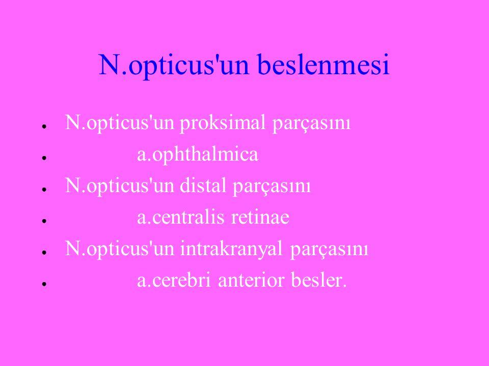 N.opticus un beslenmesi