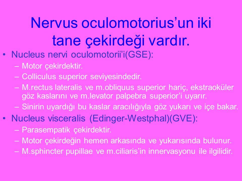Nervus oculomotorius'un iki tane çekirdeği vardır.