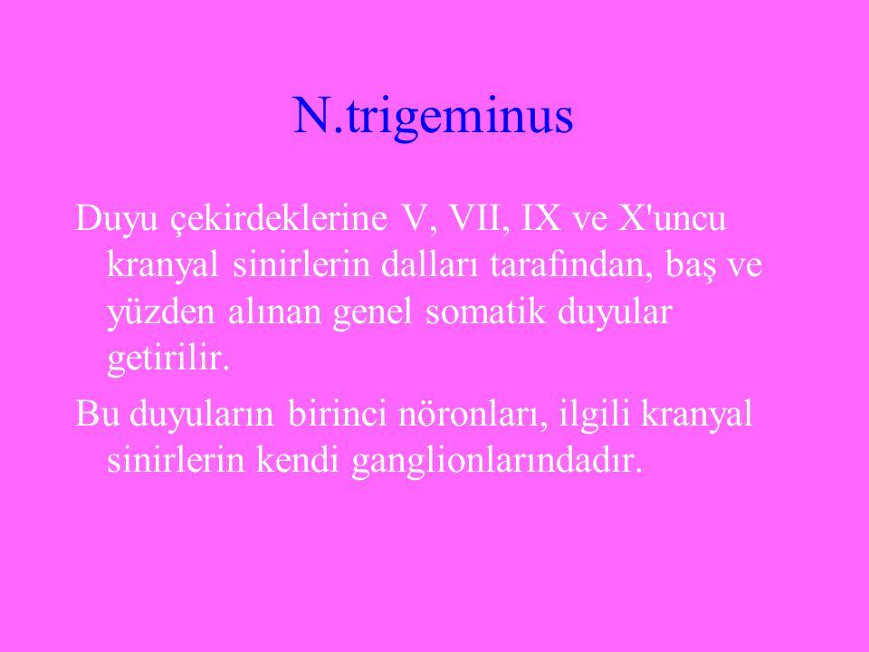 N.trigeminus Duyu çekirdeklerine V, VII, IX ve X uncu kranyal sinirlerin dalları tarafından, baş ve yüzden alınan genel somatik duyular getirilir.