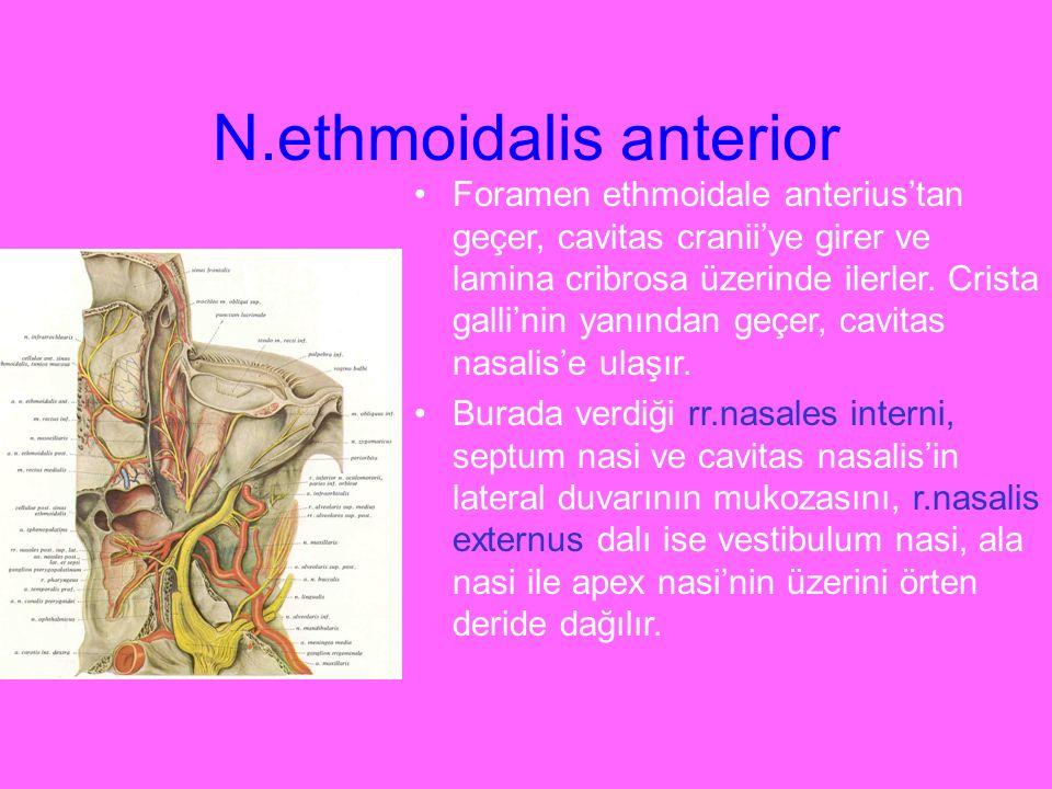 N.ethmoidalis anterior