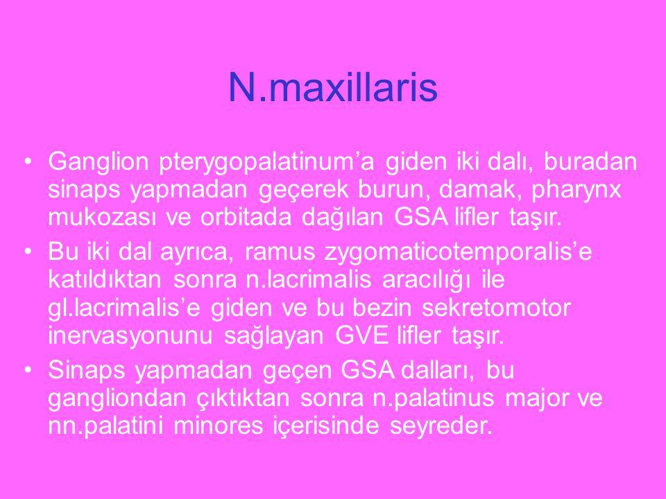 N.maxillaris