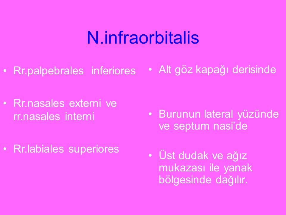 N.infraorbitalis Rr.palpebrales inferiores
