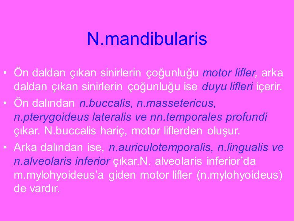 N.mandibularis Ön daldan çıkan sinirlerin çoğunluğu motor lifler, arka daldan çıkan sinirlerin çoğunluğu ise duyu lifleri içerir.