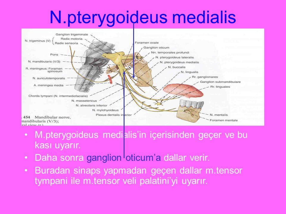 N.pterygoideus medialis