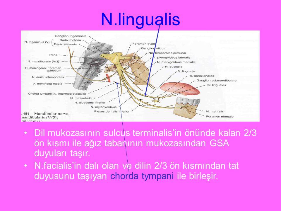 N.lingualis Dil mukozasının sulcus terminalis'in önünde kalan 2/3 ön kısmı ile ağız tabanının mukozasından GSA duyuları taşır.